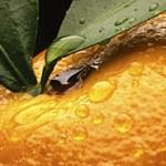 Orangen Joghurt Gesichtsmaske