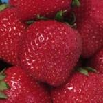 Früchte des Sommers – Erdbeere