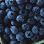Früchte des Sommers – Heidelbeeren