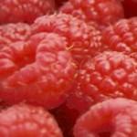 Früchte des Sommers – Himbeeren