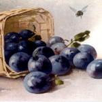 Früchte des Sommers – Pflaumen & Zwetschgen