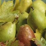 Gesünder mit frisch gepressten Obst- und Gemüsesäften