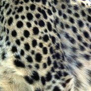 Leopardenprint