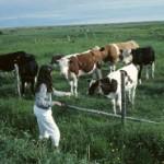 Versteckte tierische Bestandteile in Lebensmitteln