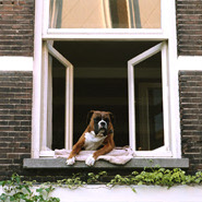 Hund überwachen