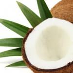 Kokosöl in der Ernährungskette
