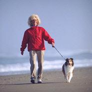 Hund und Spazieren