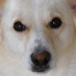 Wie Hunde Gerüche los werden
