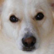 Hund Gerüche