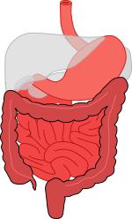 Das Verdauungssystem