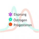 Hormonschwankungen: Östrogen und Progesteron