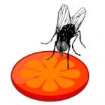 Fliegen vom Futter weg