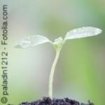 Kleine Beiträge für ein gesünderes und nachhaltigeres Leben summieren sich