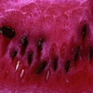 Wassermelone für Smoothies