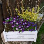 Mein Gartenjahr 2019: Neue Pflanzen, Schädlinge, Hitze und leckere Tomaten