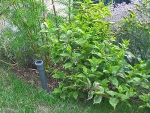 Gartenbewässerung mit Regenrohren